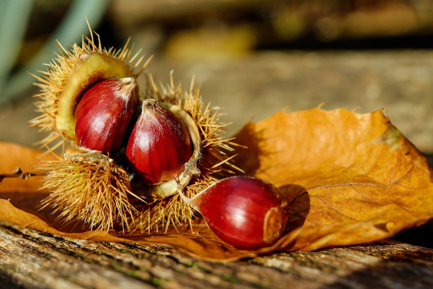 blurred-background-chestnuts-close-up-219737
